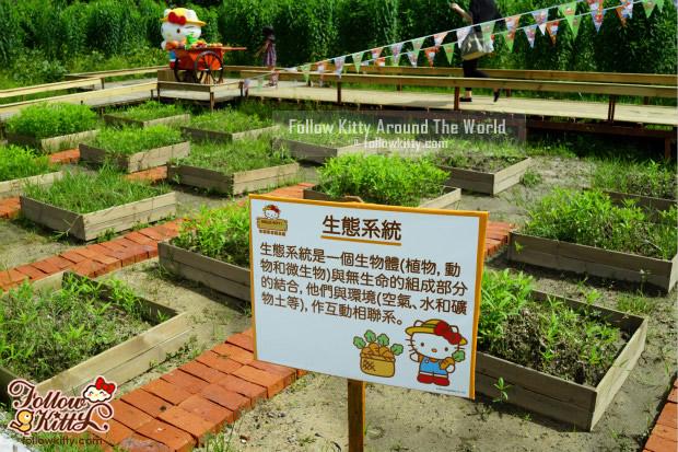 Hello Kitty有機薈低碳農莊的小農夫耕地